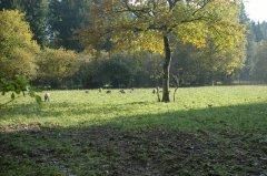 Ebersberger-Forst.JPG