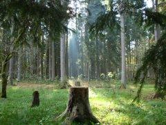 natur1.jpg